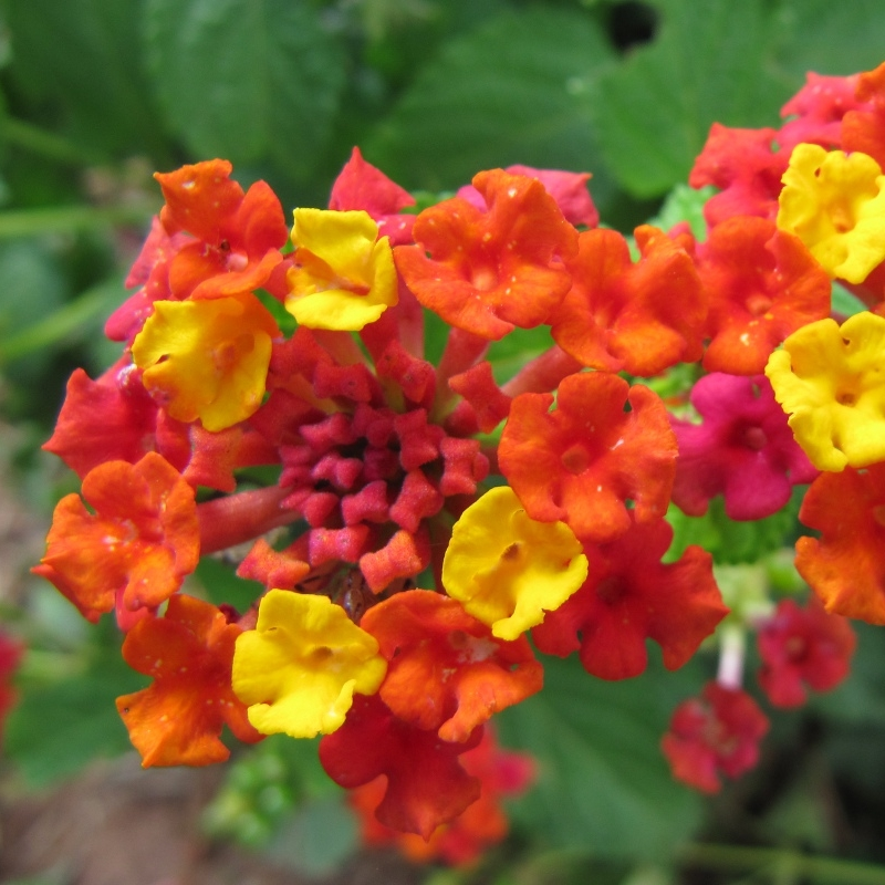 The Best Flowering Groundcovers For Your Kauai Commercial