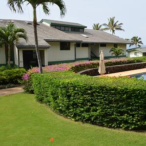 Coconut trees can enhance your Kauai property