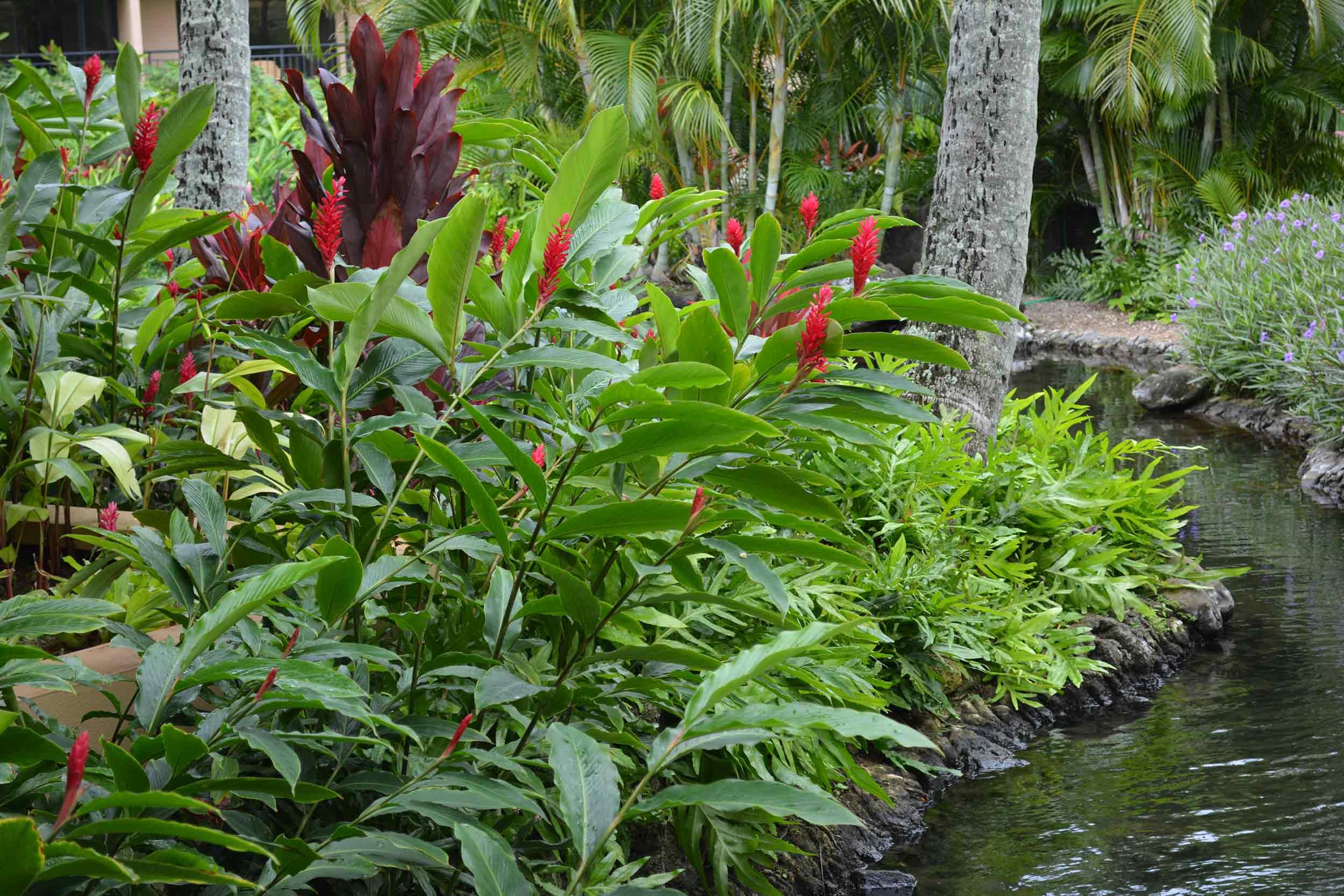 sheraton-kauai-resort-pool-landscaping-koloa-hi-3.jpg