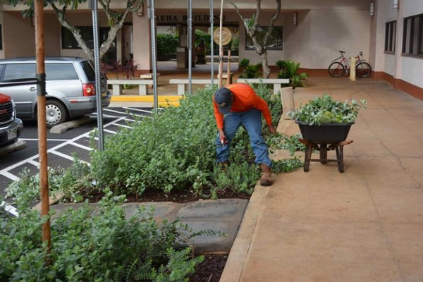 lihue civic center landscaping in kauai, hi