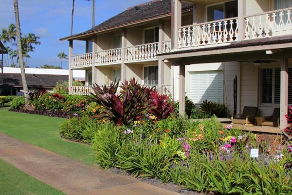 Islander on the Beach in Kauai Hi