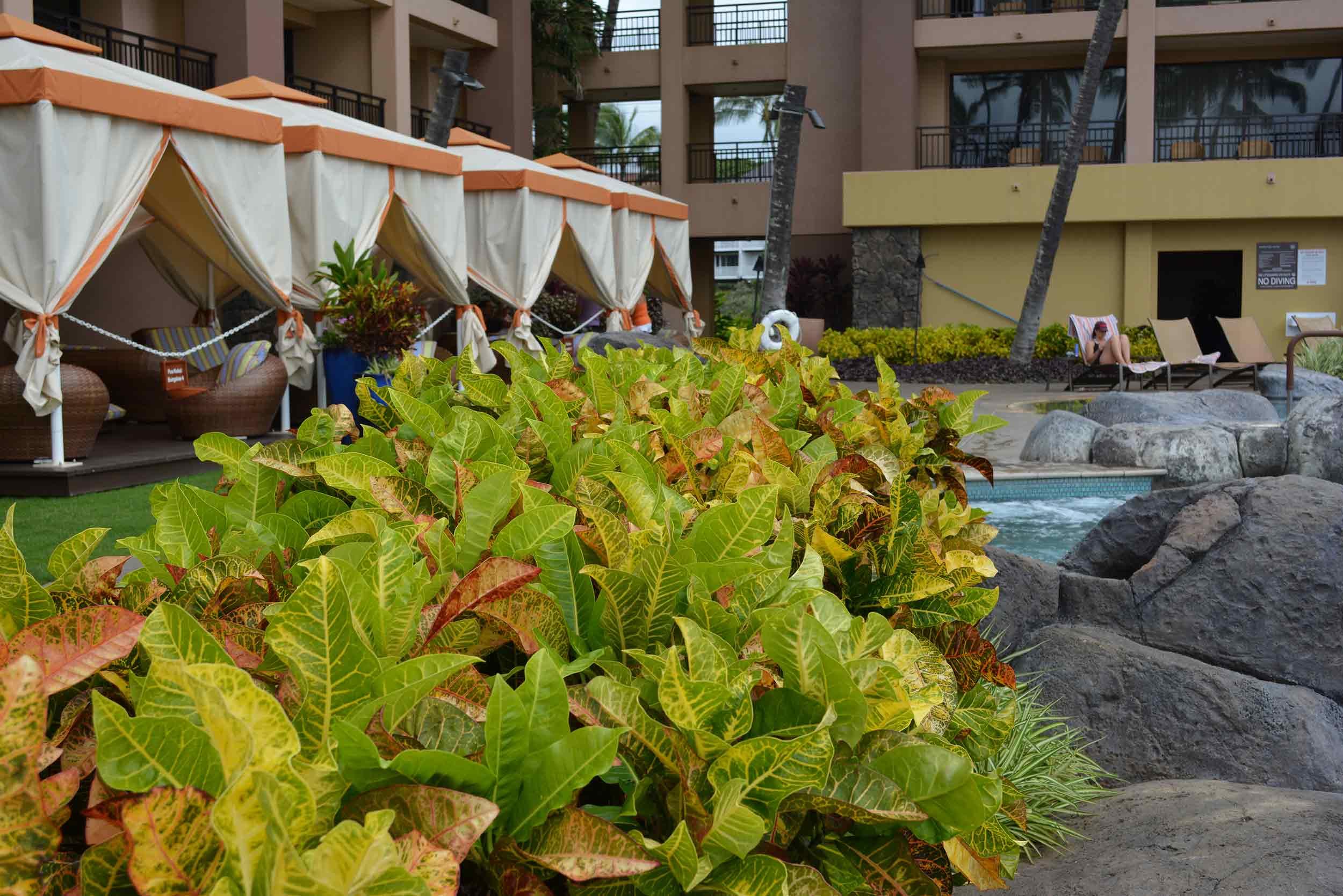 Landscaping for the Sheraton Kauai Resort pool in Koloa Hi