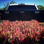 adding fresh plants to your commercial landscape is an enhancement