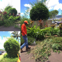 extensive pruning is typically considered a landscape service enhancement