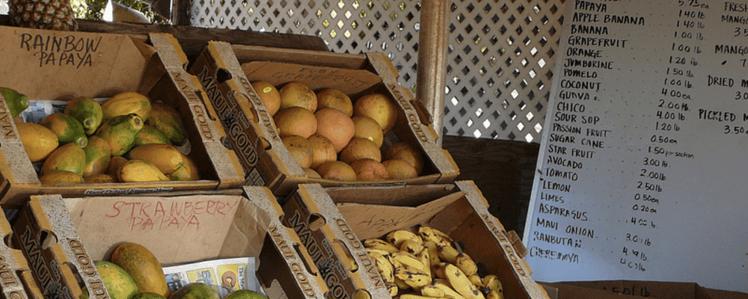 a papaya tree is one of the best fruit trees on Kauai