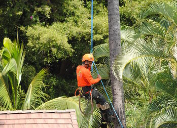 Tree trimmers for NKO