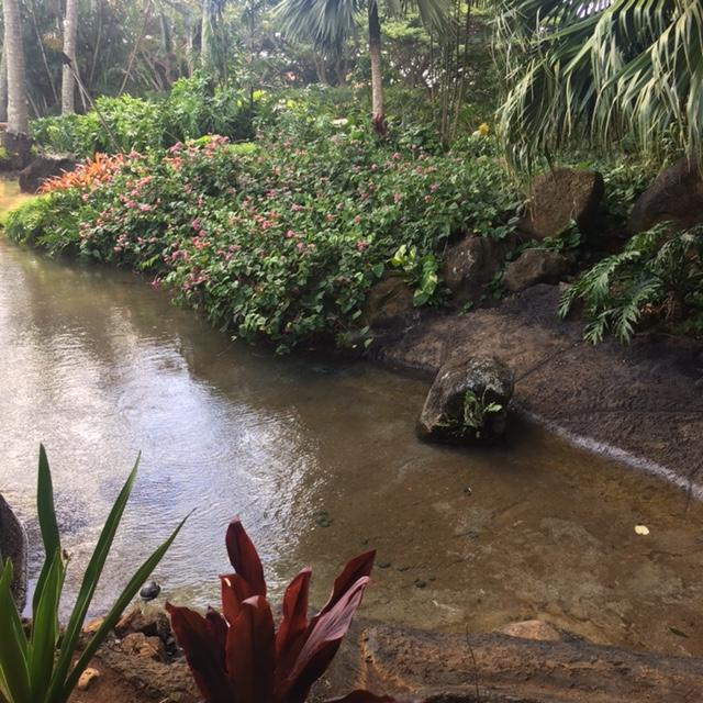 Pond and landscaping at Keoki's Paradise