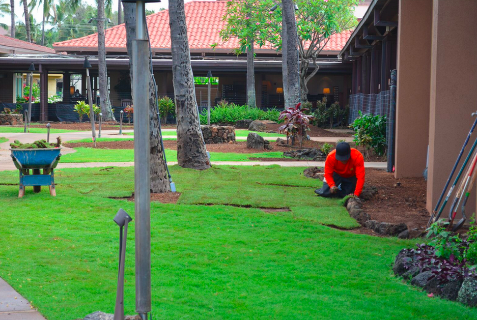 landscape renovation at Sheraton Kauai
