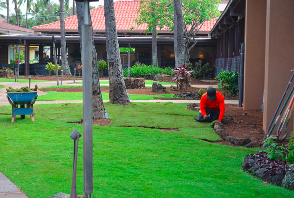 landscape renovation at Sheraton Kauai